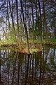 Lubniewice, Poland - panoramio - Michal Gorski (5).jpg