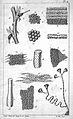 M. H. Dutrochet, Recherches anatomiques... Wellcome L0023902.jpg