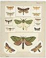 MA I437903 TePapa Plate-XLII-The-butterflies full.jpg
