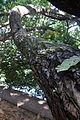 MacRitchie Reservoir Park (5186917073).jpg