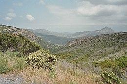 Macchia mediterranea bassa (Corsica)