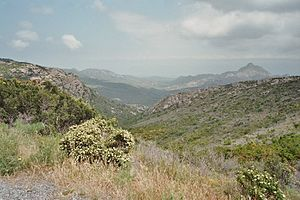 Maquis shrubland - Low Maquis in Corsica