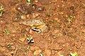Madayipara Pookkalam Nature Camp 2018 IMG 8892.jpg