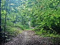 Magstadter Wald - panoramio.jpg