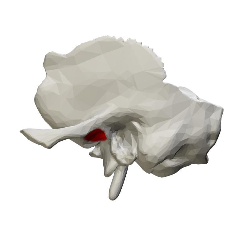 Mandibular Fossa