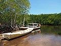 Mangrove Forest - 2015.03 - panoramio.jpg