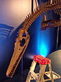 Marine dinosaur (4047513254).jpg
