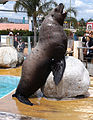 Marineland - sea lion 3.jpg