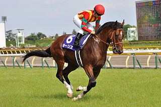 Maurice (horse) Japanese-bred Thoroughbred racehorse