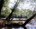 Mcintosh-riverbank.jpg