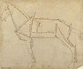 Measured Drawing of a Horse Facing Left (recto). MET 19.76.5.jpg