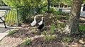 Melanistic Pekin Duck 4.jpg