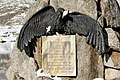 Memorial Adrien Guex 05 11.jpg