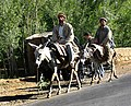 Men on donkeys, Afghanistan.jpg