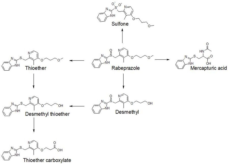 Metabolism of rabeprazole.jpg