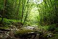 Middle-seneca-creek - West Virginia - ForestWander.jpg