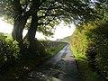 Minor road to Tannacreiff - geograph.org.uk - 264792.jpg