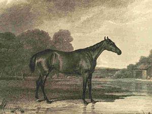 Minuet (horse) - Image: Minuet (horse)