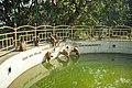 Monkeys drinking at the World Peace Pond, Swayambhunath (31310684822).jpg