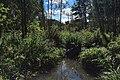 Moscow, Losiny Ostrov park, Budaika river (31446440662).jpg