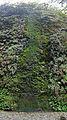 Moss cascade at Fern Canyon.jpg