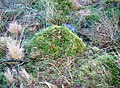 Moss head's, Brown Muir Hill.JPG