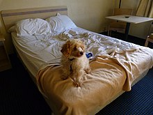 A photo showing the interior of a Motel 6 room with a dog sitting on a bed.