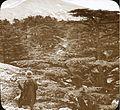 Mount Lebanon (4878995425).jpg