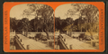 Mr. Hart's orange grove, Palatka, from Robert N. Dennis collection of stereoscopic views.png