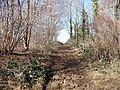 Muddy path - geograph.org.uk - 1747923.jpg