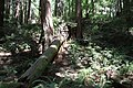 Muir Woods National Monument 2010 12.JPG