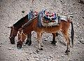 Munching Horses.jpg