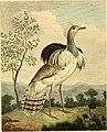 Musei Leveriani explicatio, anglica et latina (1792) (14749580602).jpg