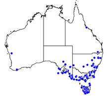 Australian map showing the jack jumper ants range in the country