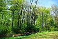NSG Ithwiesen - südlich vom Segelfluggelände Ithwiesen (11).jpg