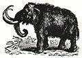 NSRW Mammoth.jpg