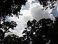 Nature20180824 122502.jpg