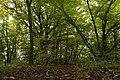 Nature reserve Zvolská homole in autumn 2014 (2).JPG