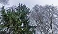 Naturerlebnispfad Erlensee.jpg