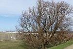 Natuur P1340490.jpg