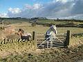 Near Lidgate. - geograph.org.uk - 125947.jpg