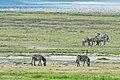 Ngorongoro 2012 05 30 2369 (7500934318).jpg