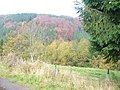 Nordeifellandschaft bei Schleiden - geo.hlipp.de - 6860.jpg
