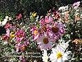 Northern Blossom 02.jpg