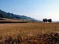 Nr Stellenbosch (3555801575).jpg