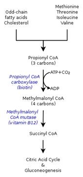 vitamin b12 deficiency wikipedia