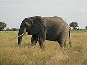 Okavango Delta, Botswana (2685404064)