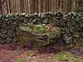 Old Drystane Dyke in Conifer Plantation - geograph.org.uk - 1519519.jpg