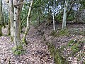 Old ha-ha ruins with ice house mound, Ballochmyle, Mauchline, East Ayrshire.jpg