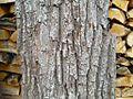 Old tree bark.jpg